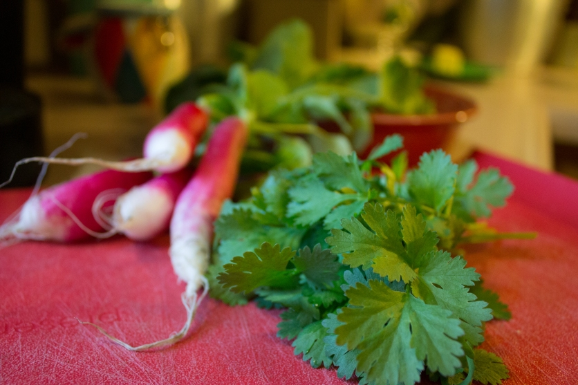 Farm Fresh!! D'Avignon Radishes and Cilantro!